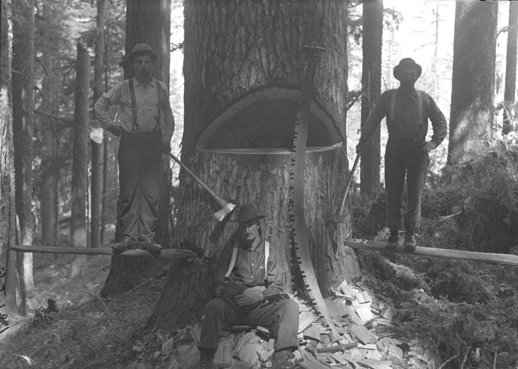 Gospel Centered Counseling -  Chopping a Tree Down - Counseling and Motivation
